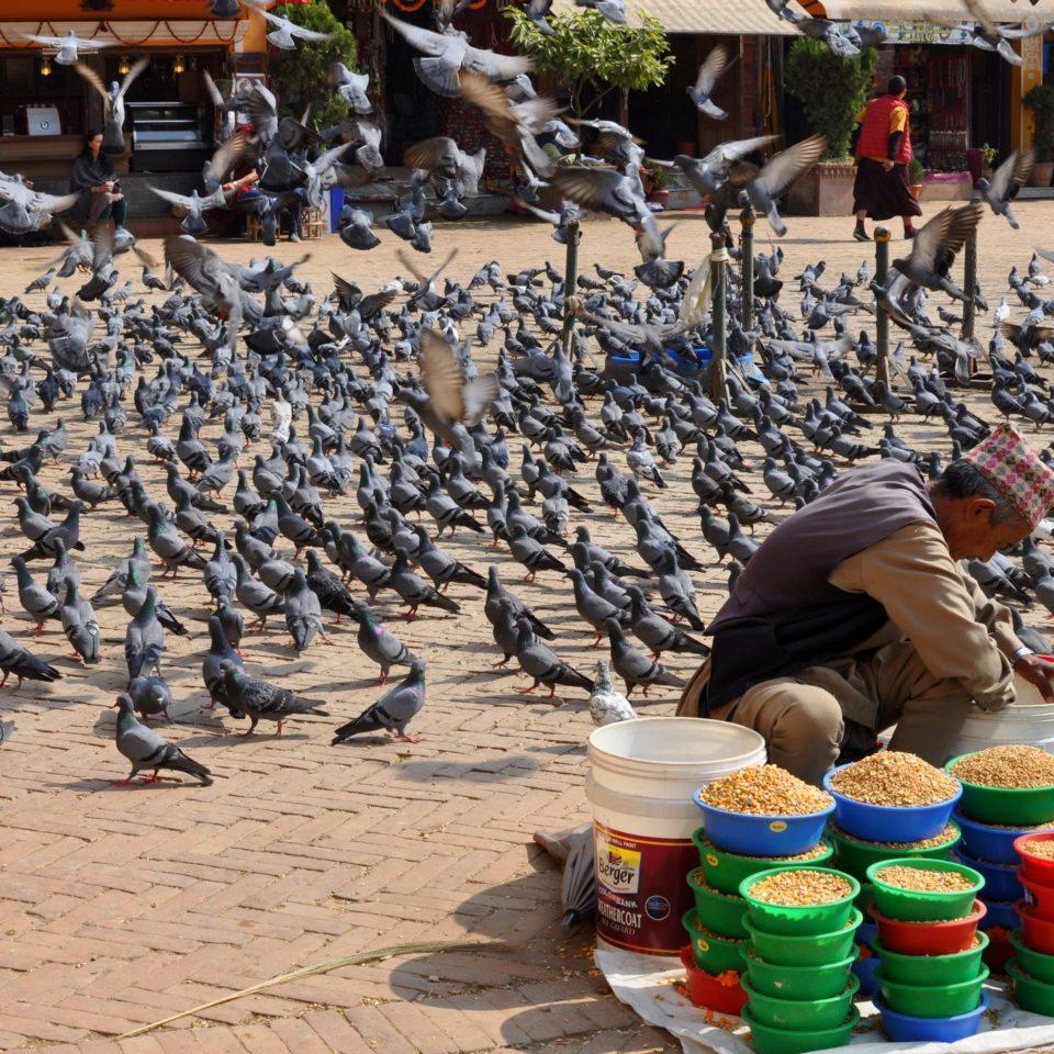 Stupa de Bodnath, marchand de graines pour les pigeons