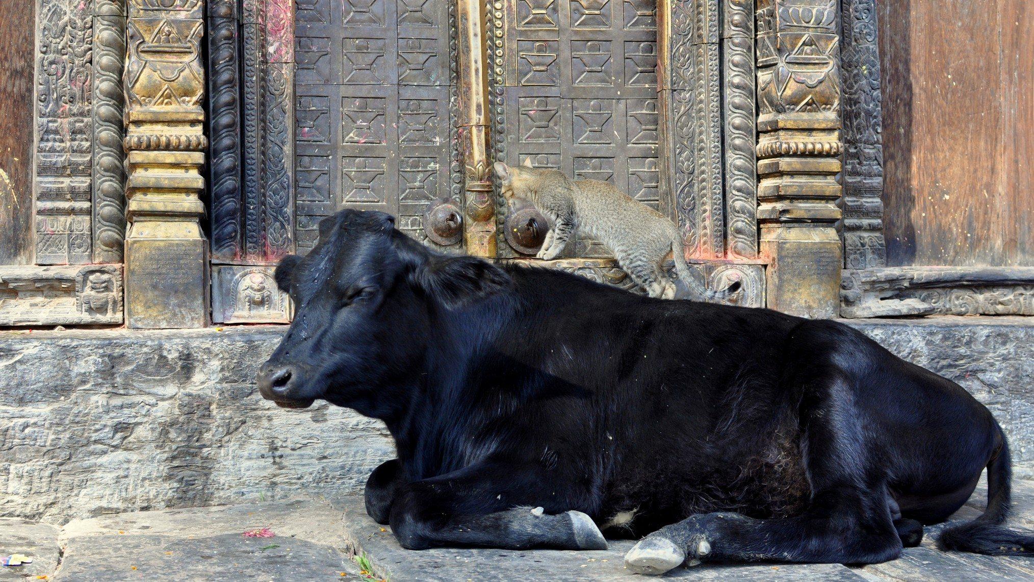 Vallée de Katmandou - Temple de Gokarna Mahadev