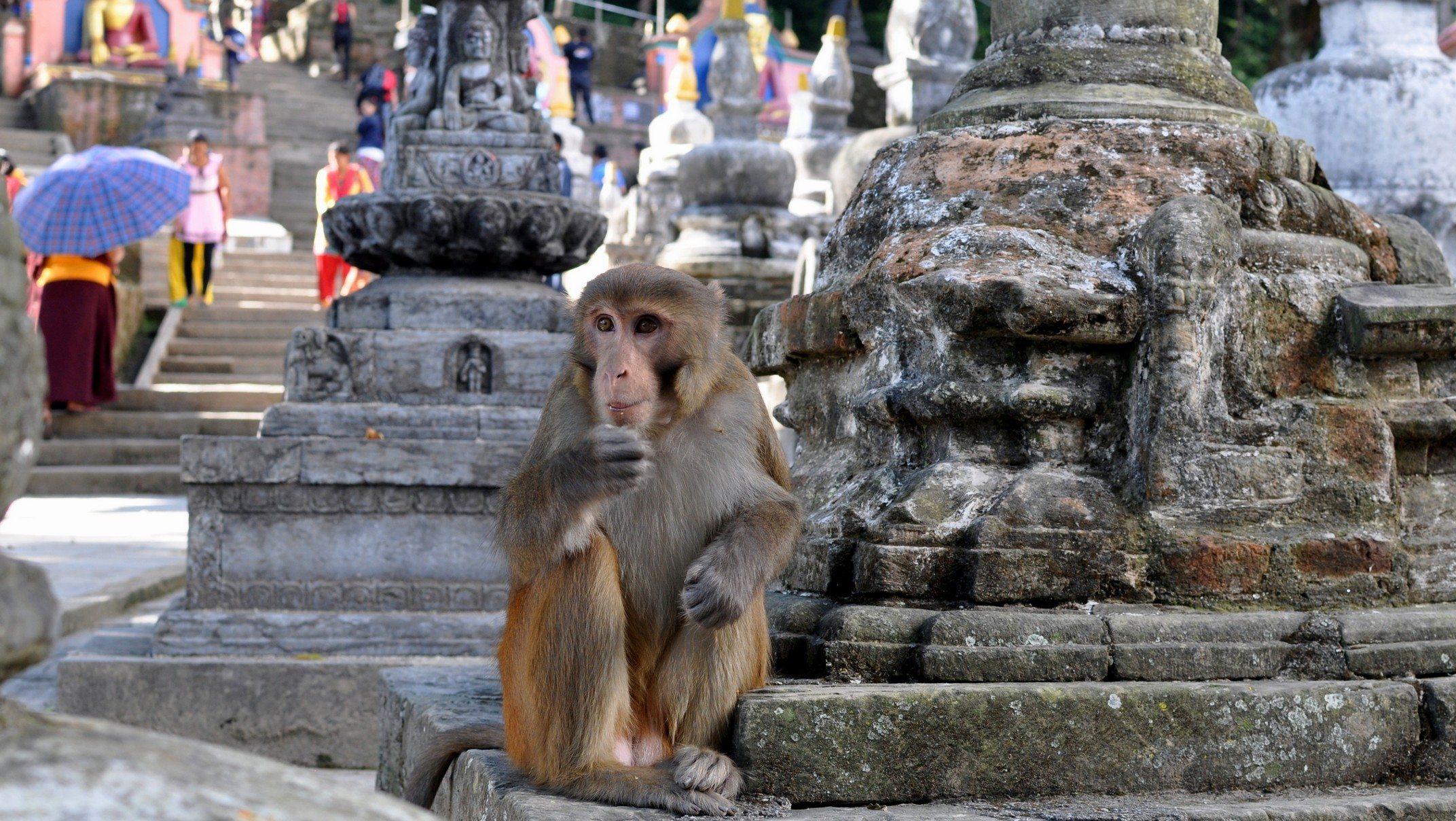 Katmandou, temple de Swayambhunath
