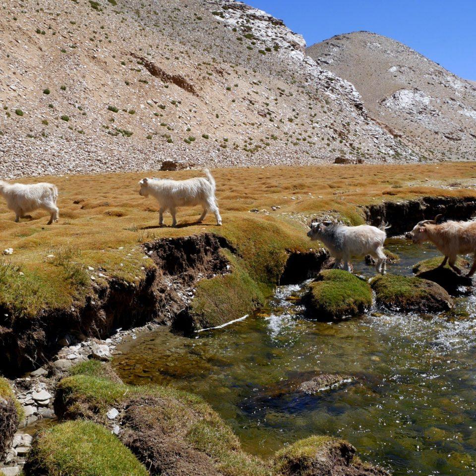 Chèvres, vers Rachung Karu