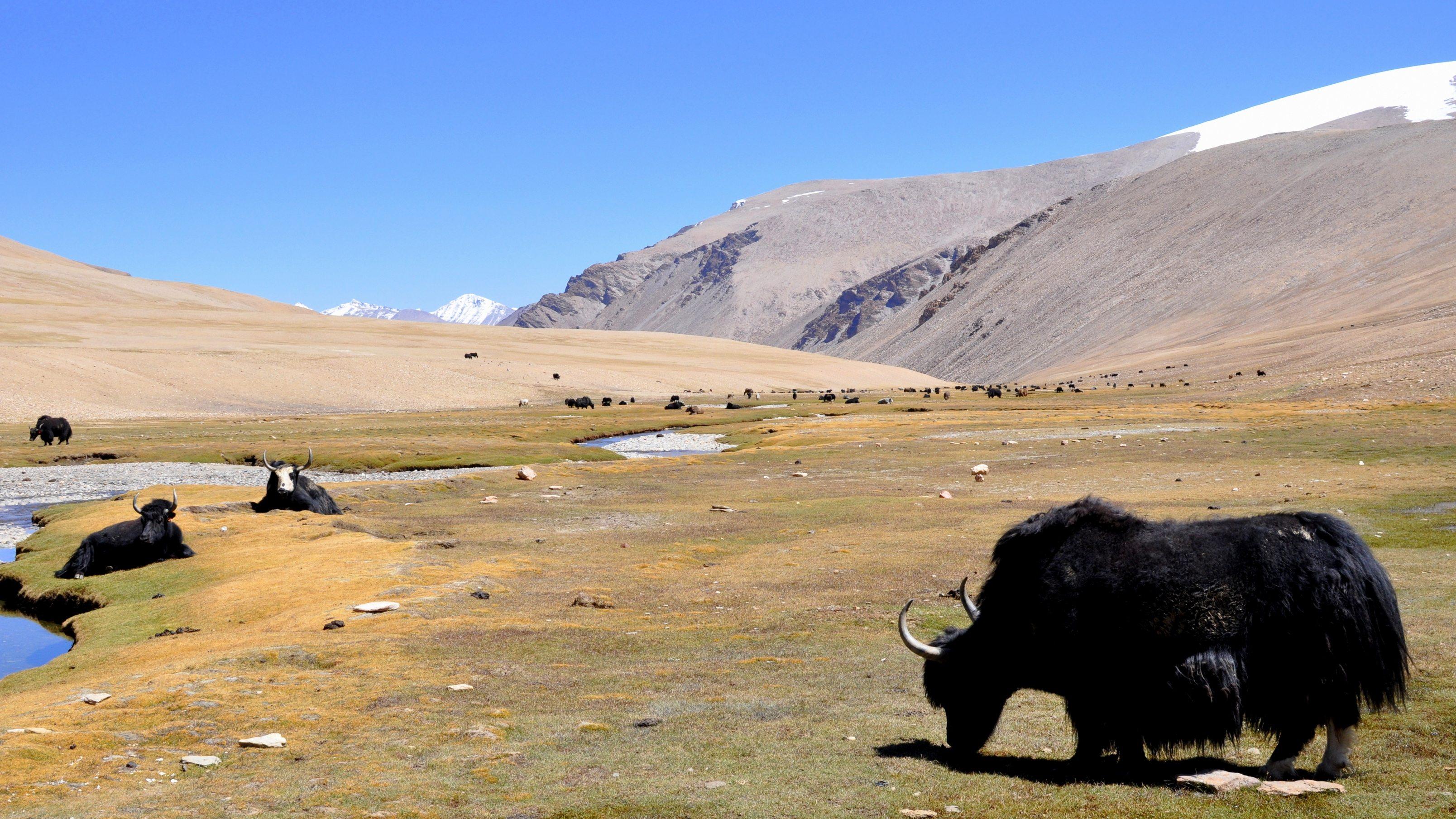 Changtang, Vallée perdue, entre les cols de Kyamaru La et Gyama La (5200m)