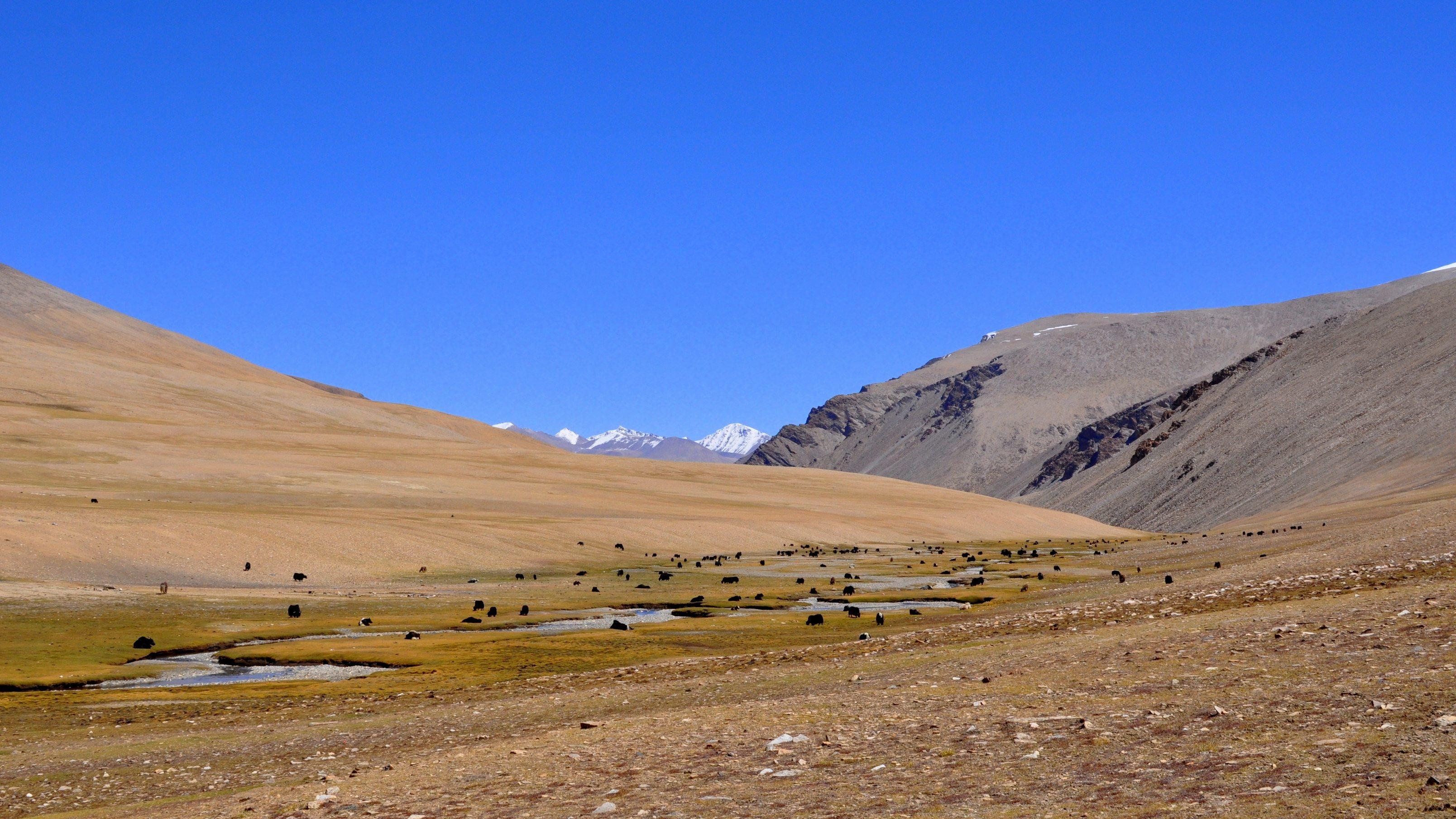 Vallée perdue, entre les cols de Kyamaru La et Gyama La (5200m)