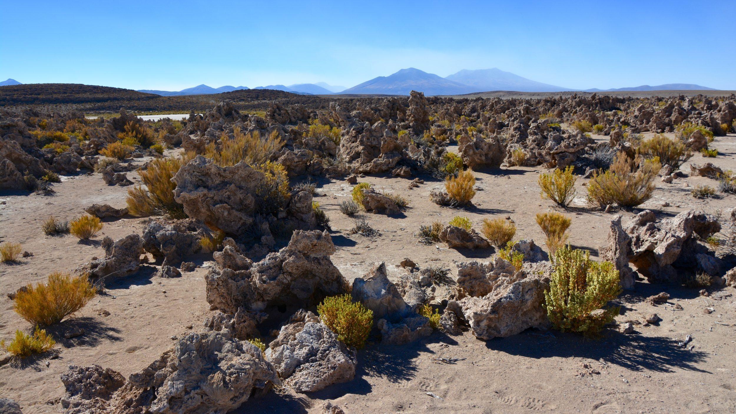 Sud Lipez Rocas Corales