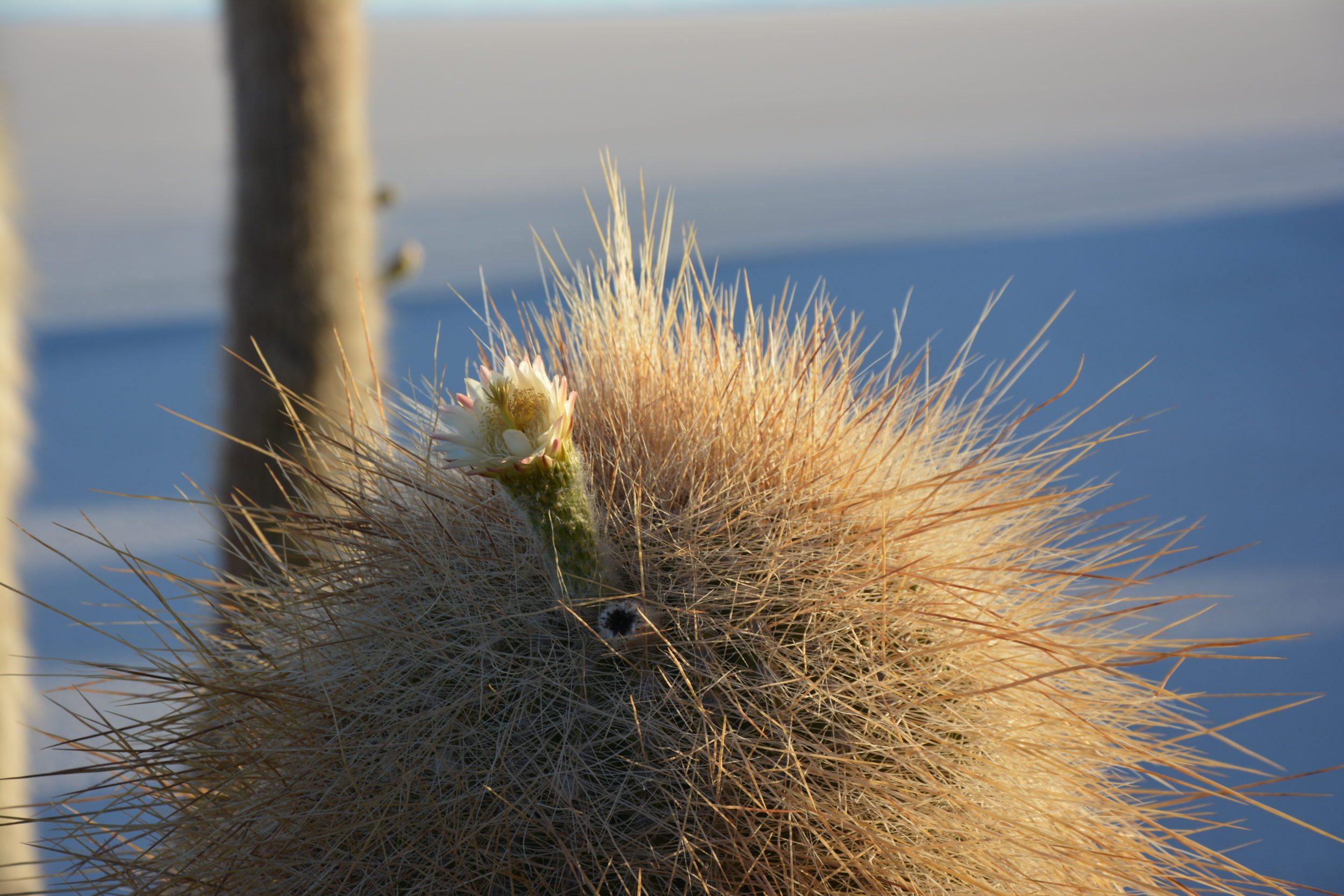 Sud Lipez Salar d'Uyuni Isla Incahuasi