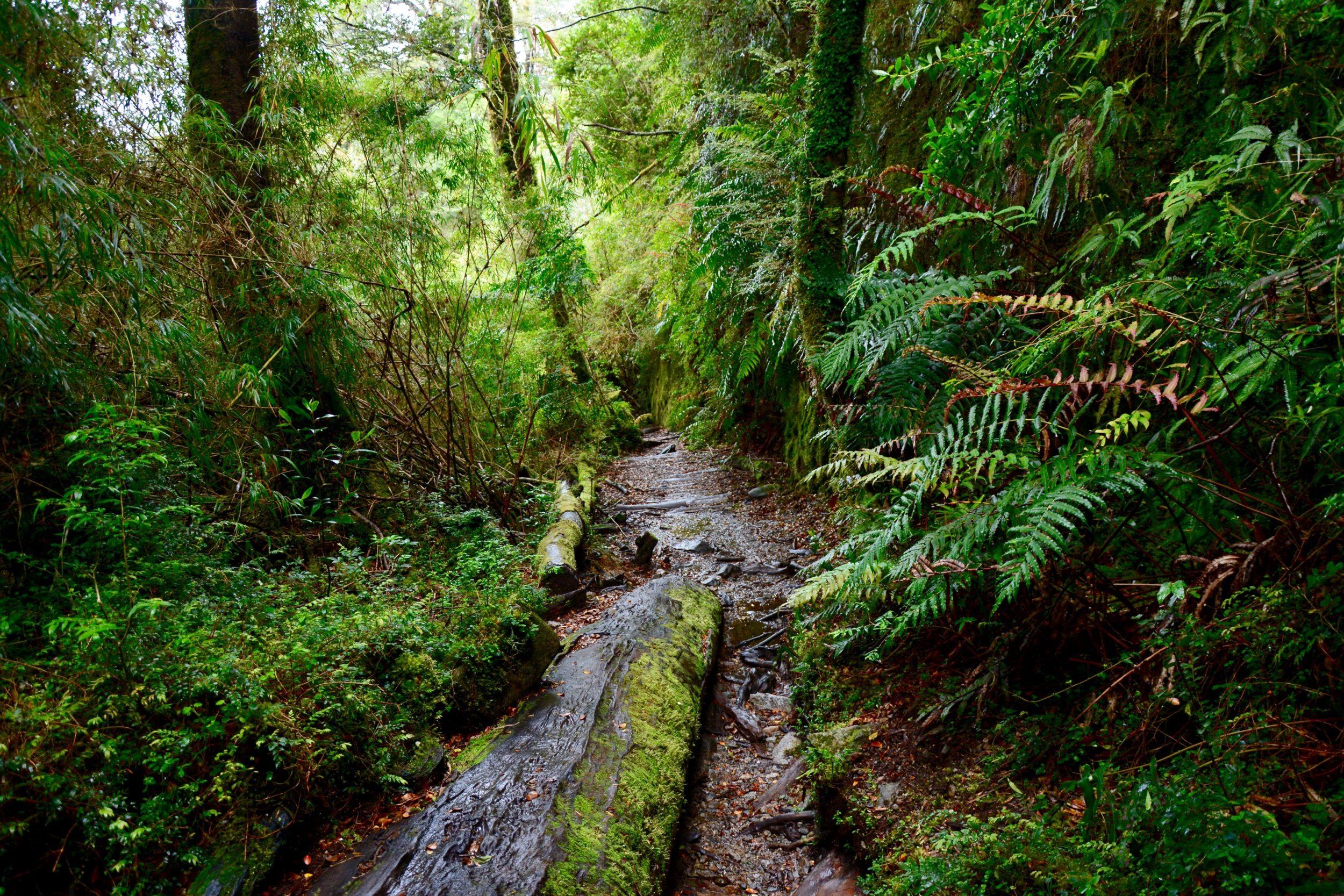 Parque Queulat, carretera austral